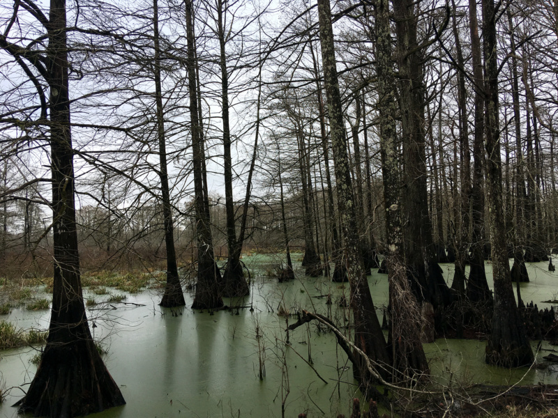 Generic Van Life - Louisiana Swamp