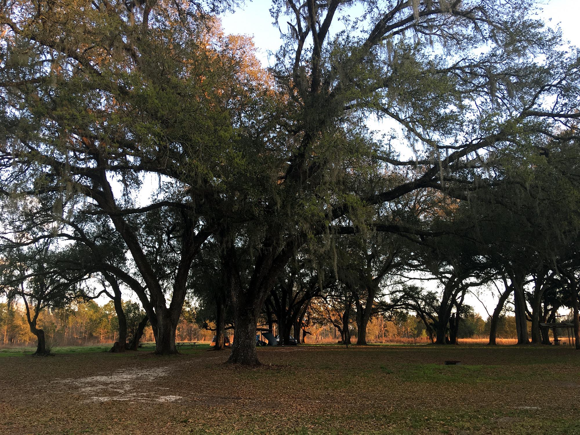 Generic Van Life - Florida Green Swamp WMA