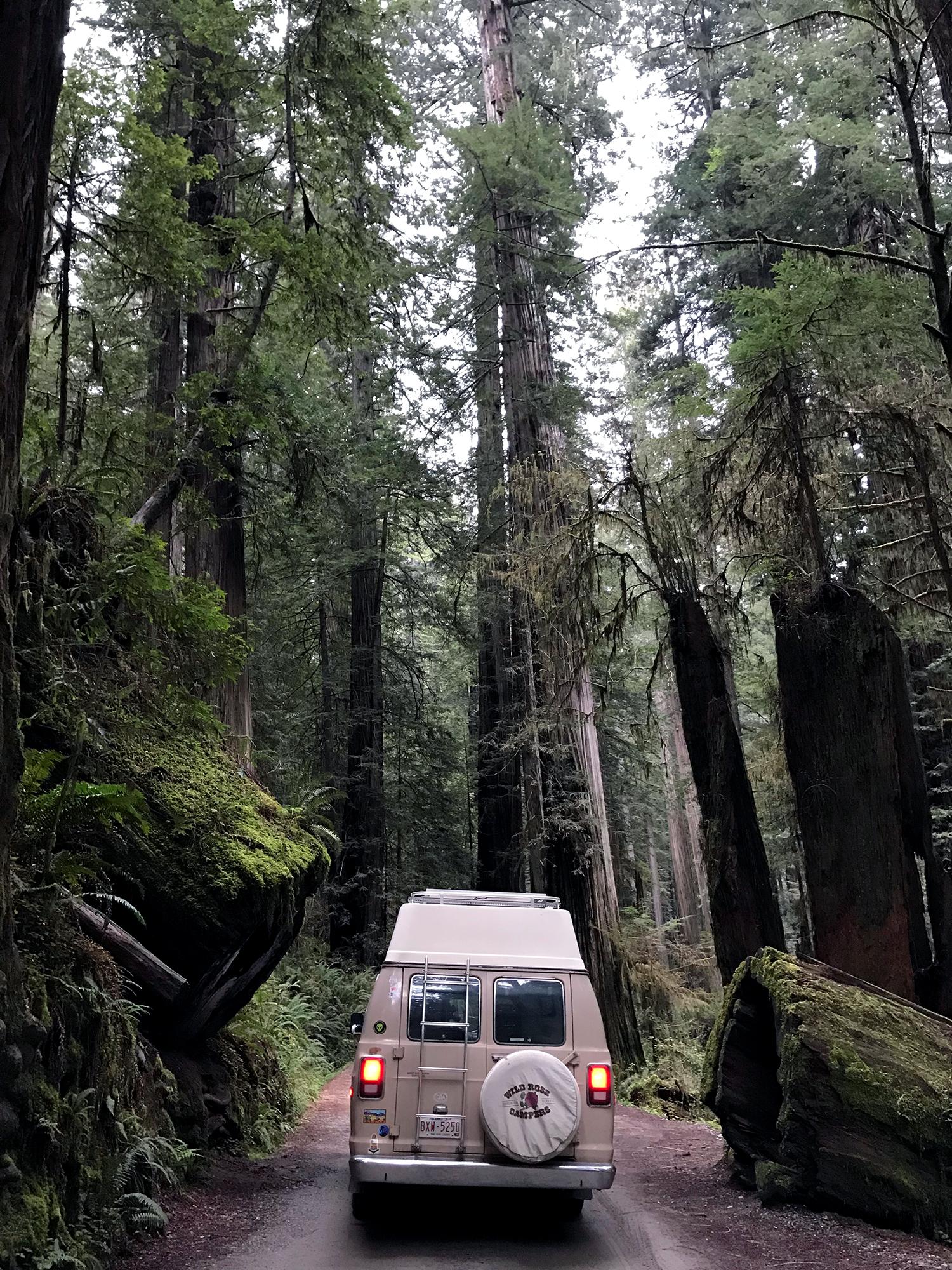 Generic Van Life - Northern California Redwoods