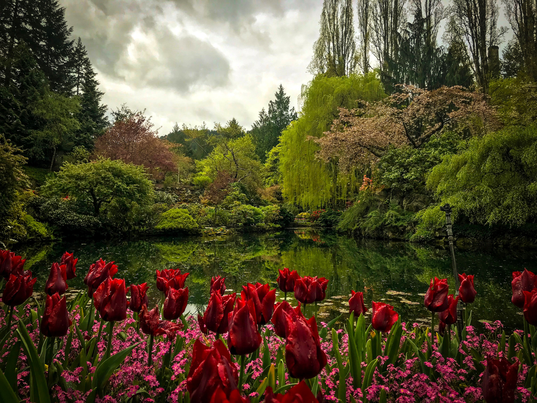 Generic Van Life - Vancouver Island Butchart Gardens Roses