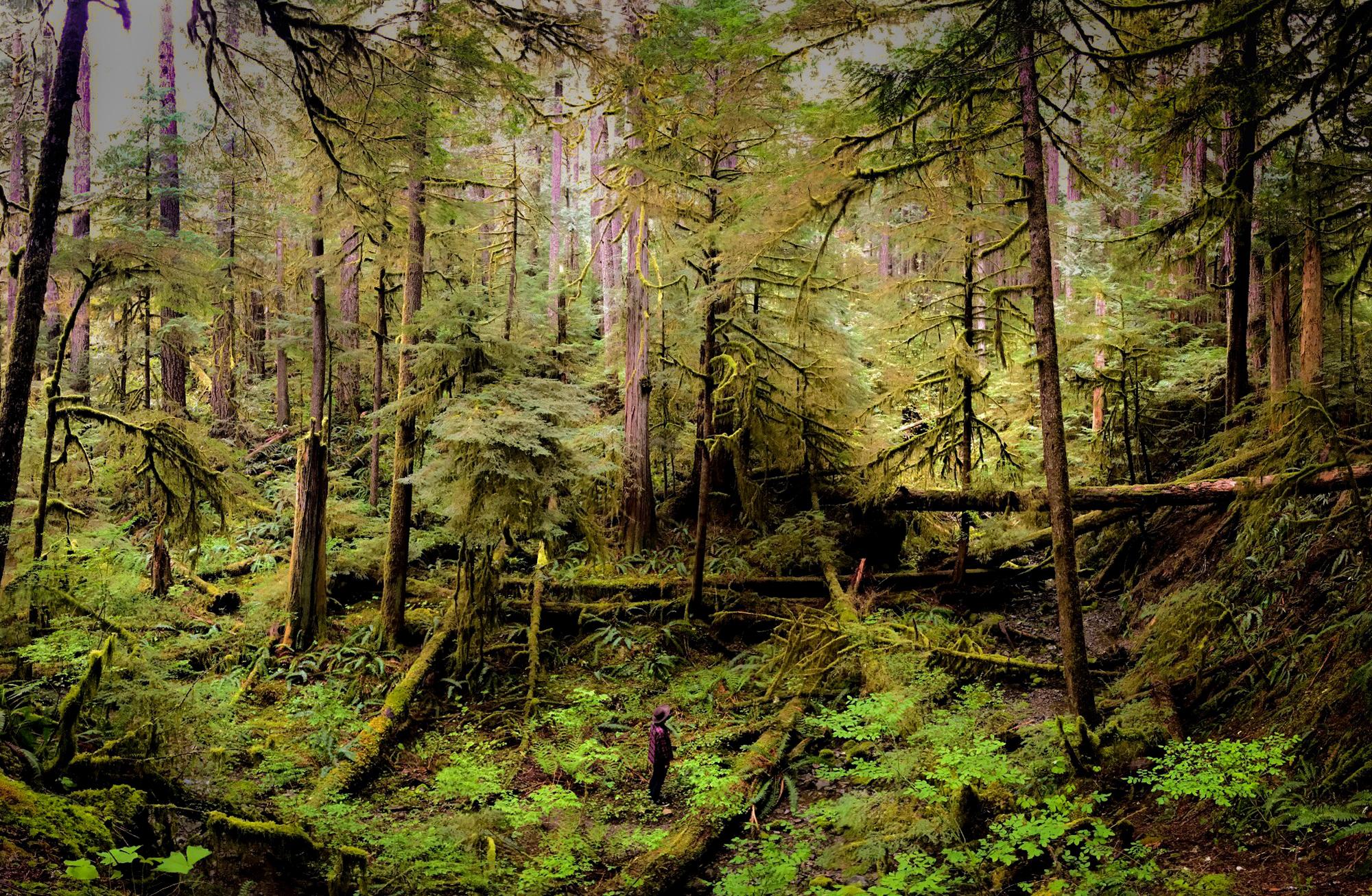 Generic Van Life - Vancouver Island Hemlock