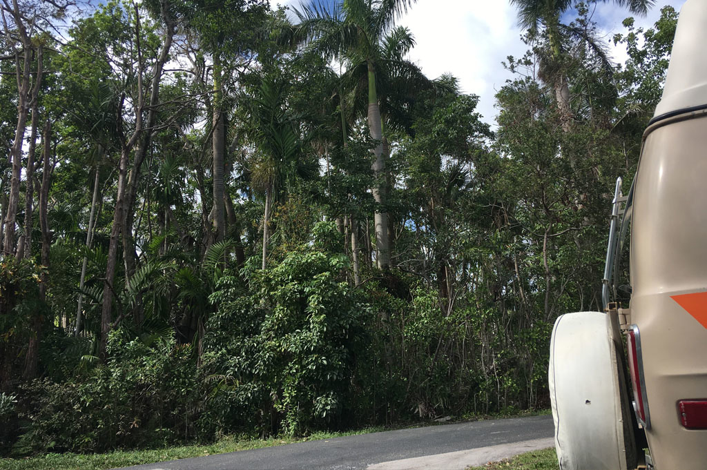 Generic-Van-Life-Camping-Easterlin Park-Florida-United-States-view from back of van