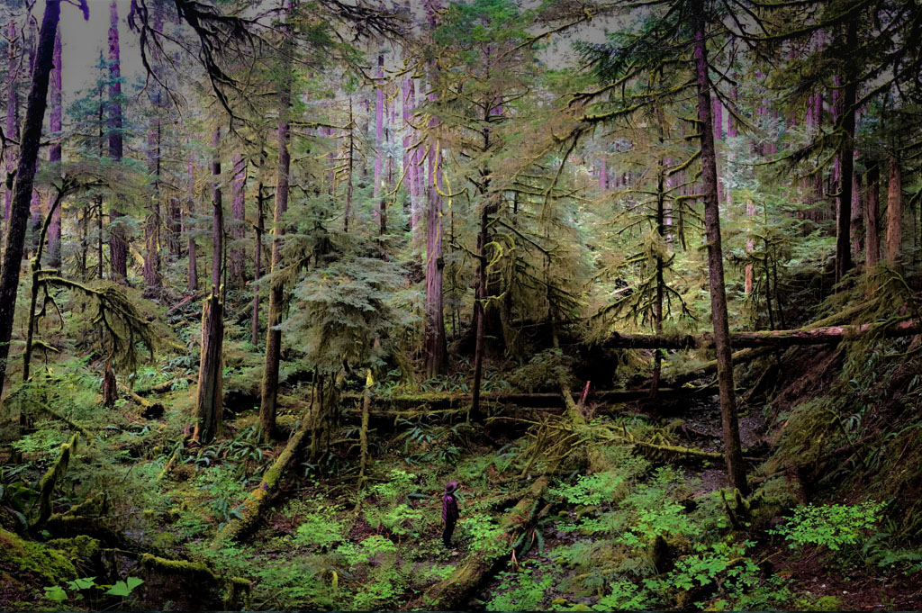 Generic Van Life - Top 5 Free Camping Spots in Canada
