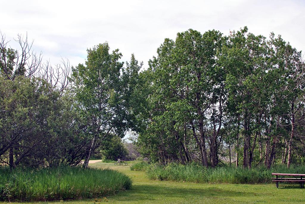 Generic-Van-Life-Camping-Spot-Lanigan-Rest-Area-Saskatchewan-Grass