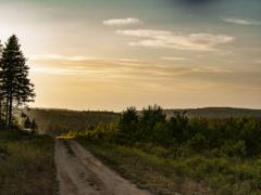 Fundy Logging Road