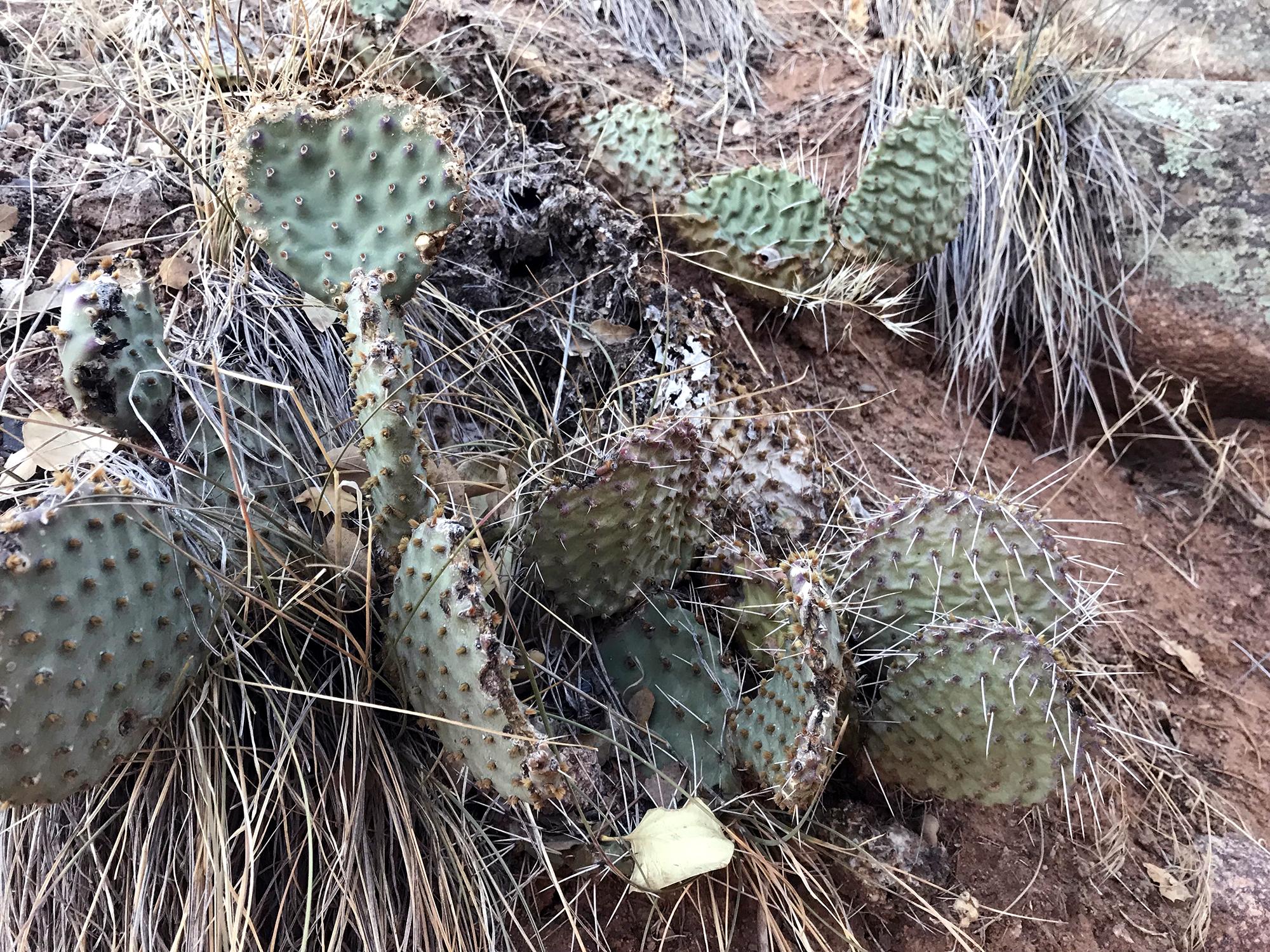Generic Van Life - Cactus