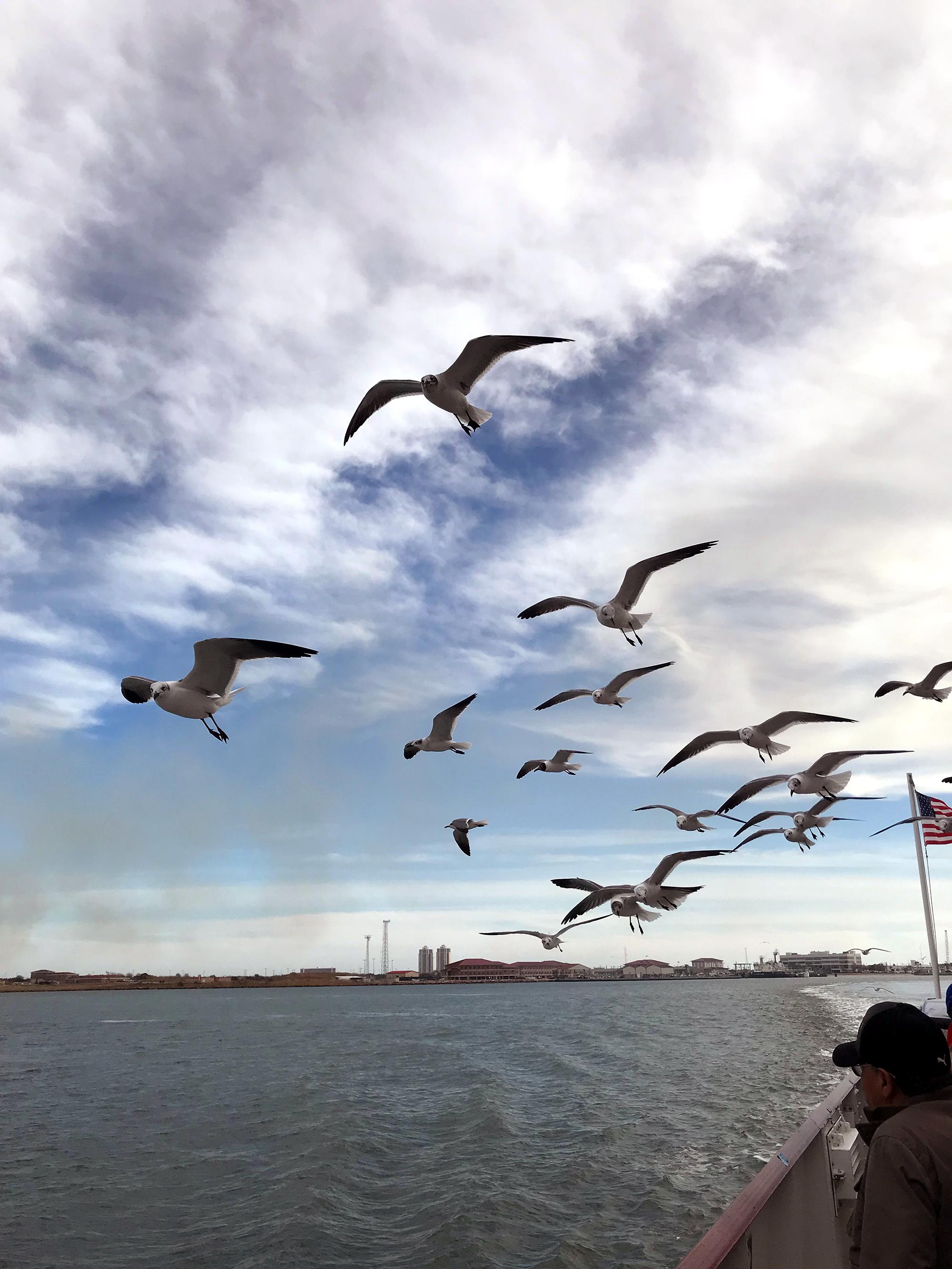 Generic Van Life - Third Coast Ferry