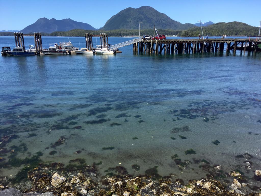 Generic Van Life - Vancouver Island Tofino
