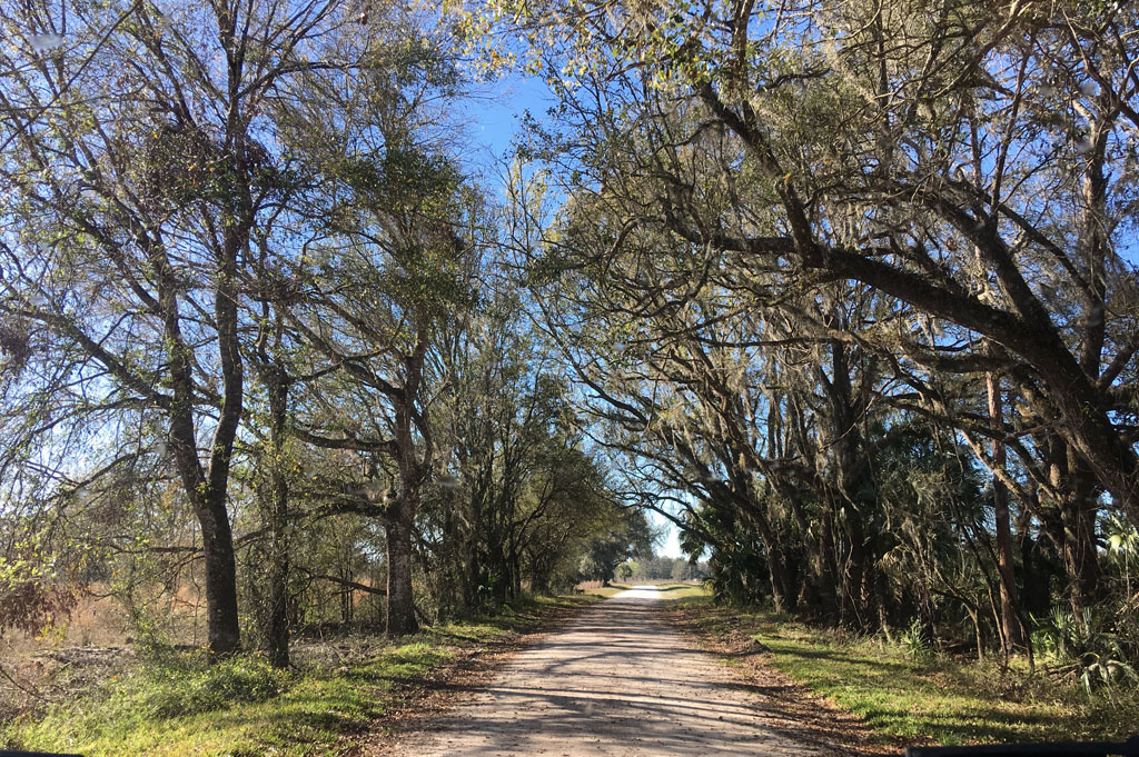 Generic-Van-Life-Camping-Green Swamp West Tract – Ashley-Florida-United-States-nice country roads