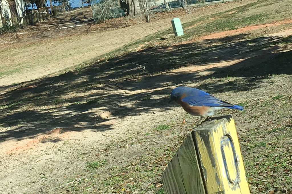 Generic-Van-Life-Camping-Indian Point – Mississippi -United-States-bird on a post