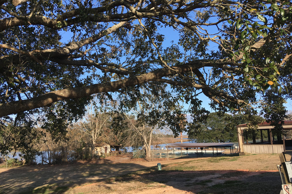 Generic-Van-Life-Camping-Indian Point – Mississippi -United-States-view from out spot