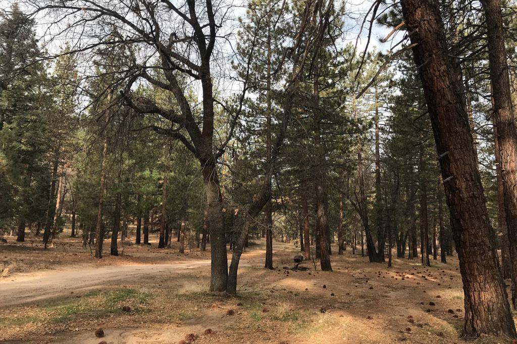 Generic-Van-Life-Camping-Spot – East Jenks Lake – California – United States – campsite view