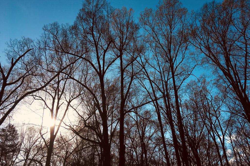 Generic-Van-Life-Camping-Spot-Mike Freeze WMA-Arkansas-United-States-tree view