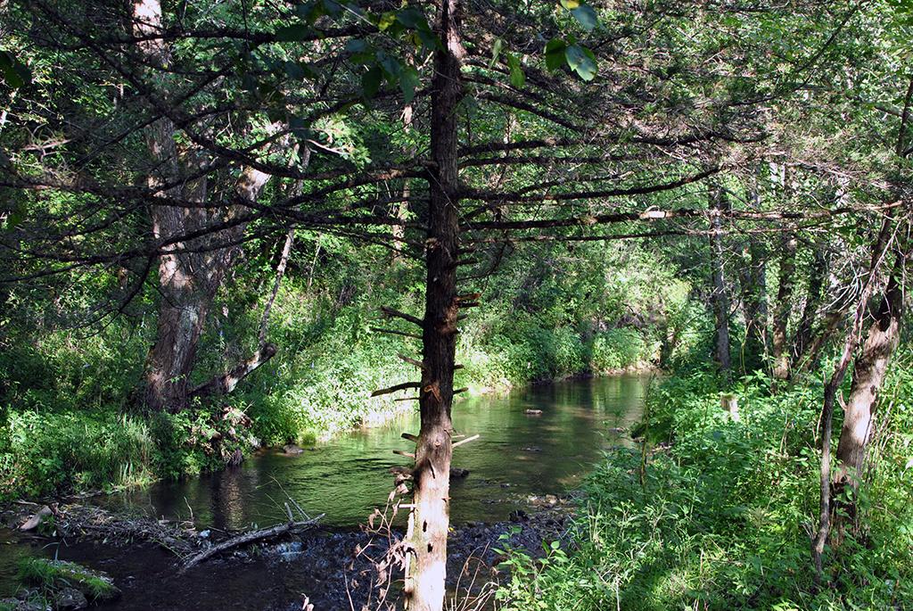 Generic-Van-Life-Camping-Spot-Gribben-Creek-Minnesota-Creek