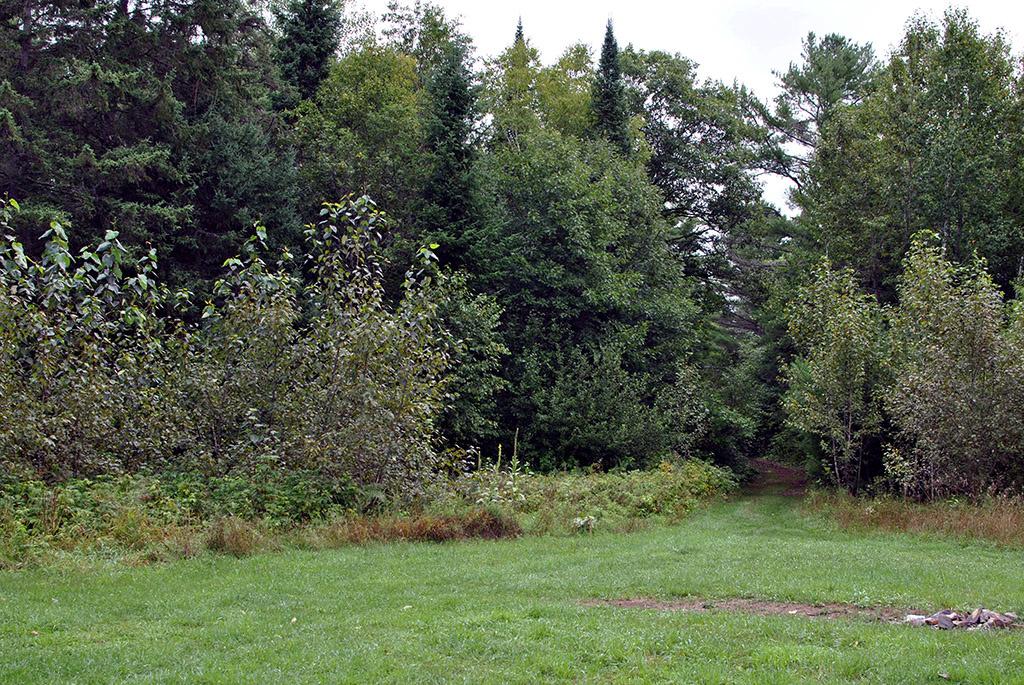 Generic-Van-Life-Camping-Spot-Cashel-Lake-Ontario-Trail