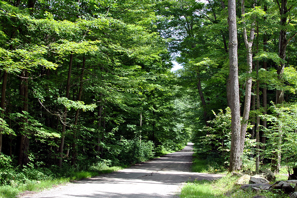 Generic-Van-Life-Camping-Spot-North-Harmony-State-Forest-New-York-Road