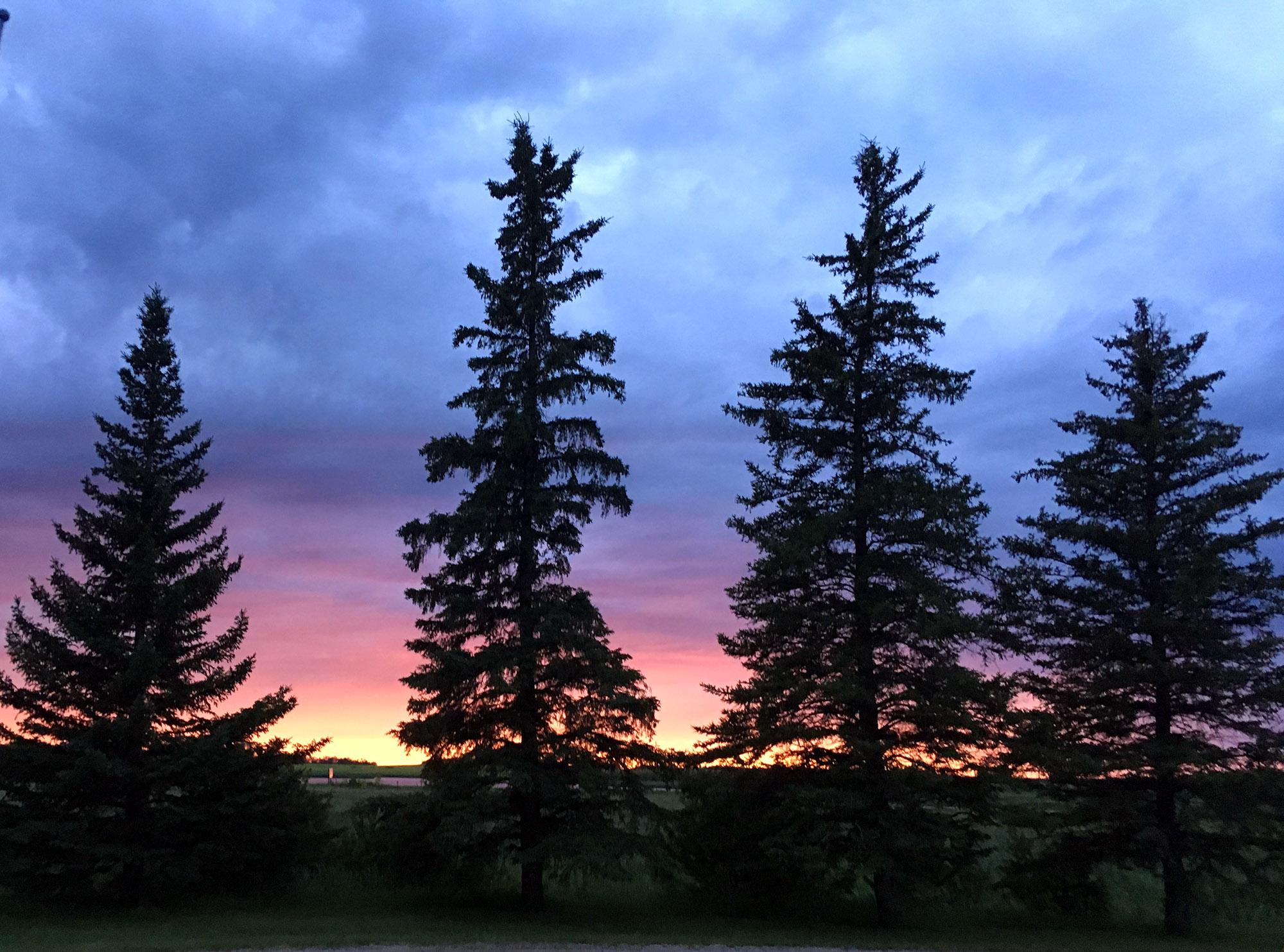 Generic Van Life - Friendly Manitoba Sunset Trees
