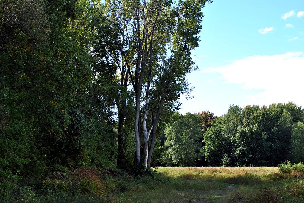 Generic-Van-Life-Camping-Spot-Pointe-Yamachiche-Quebec-Trail