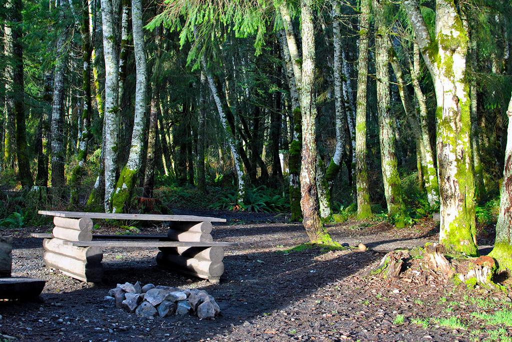 Generic-Van-Life-Camping-Spot-Gosling-Bay-British-Columbia-Trees