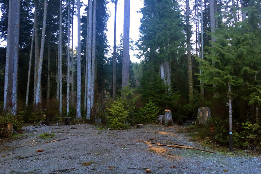 Generic-Van-Life-Camping-Spot-Cougar-Creek-British-Columbia-Campsite