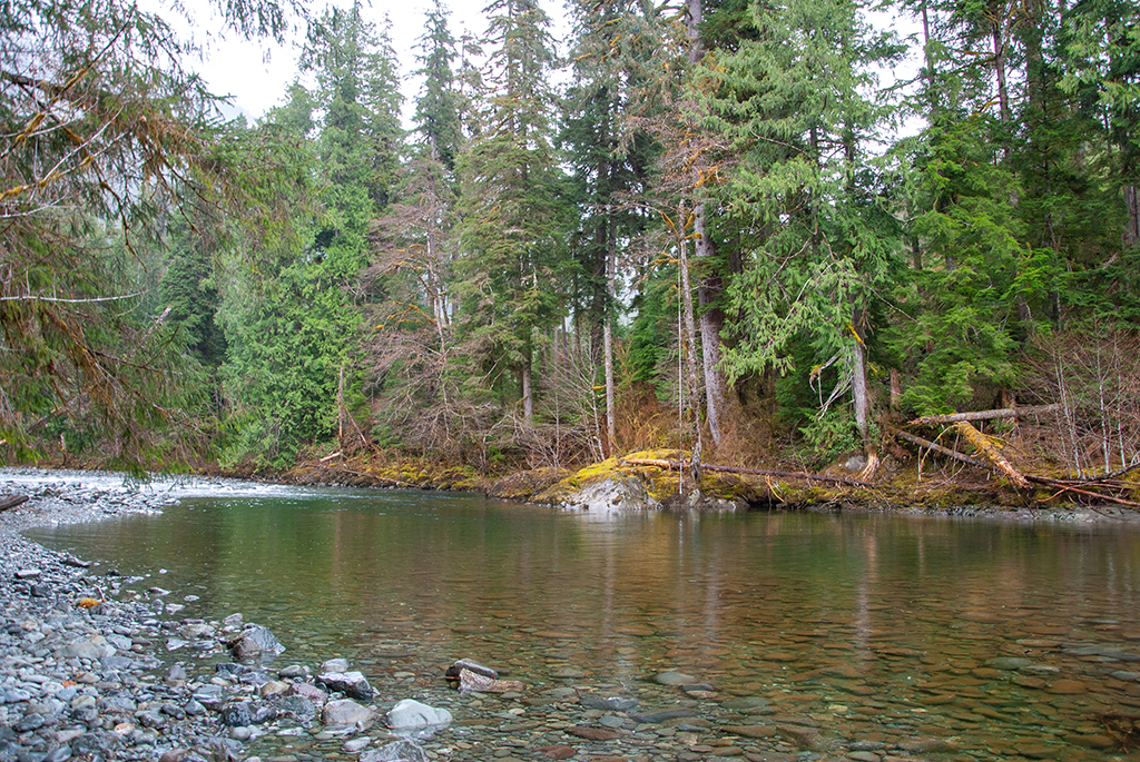 Generic Van Life - The Ultimate Vancouver Island Road Trip - Leiner River