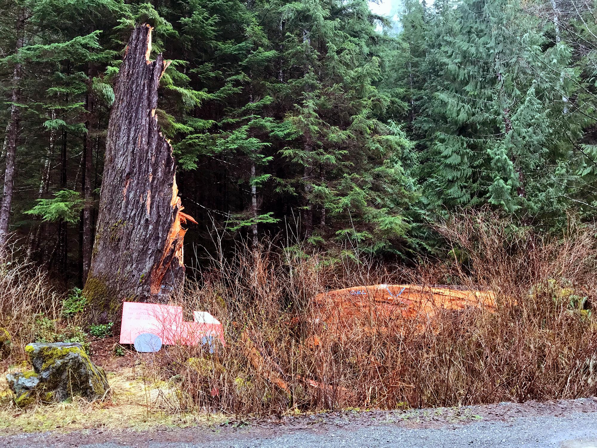 Generic Van Life - The Ultimate Vancouver Island Road Trip - Tahsis Presidents Tree