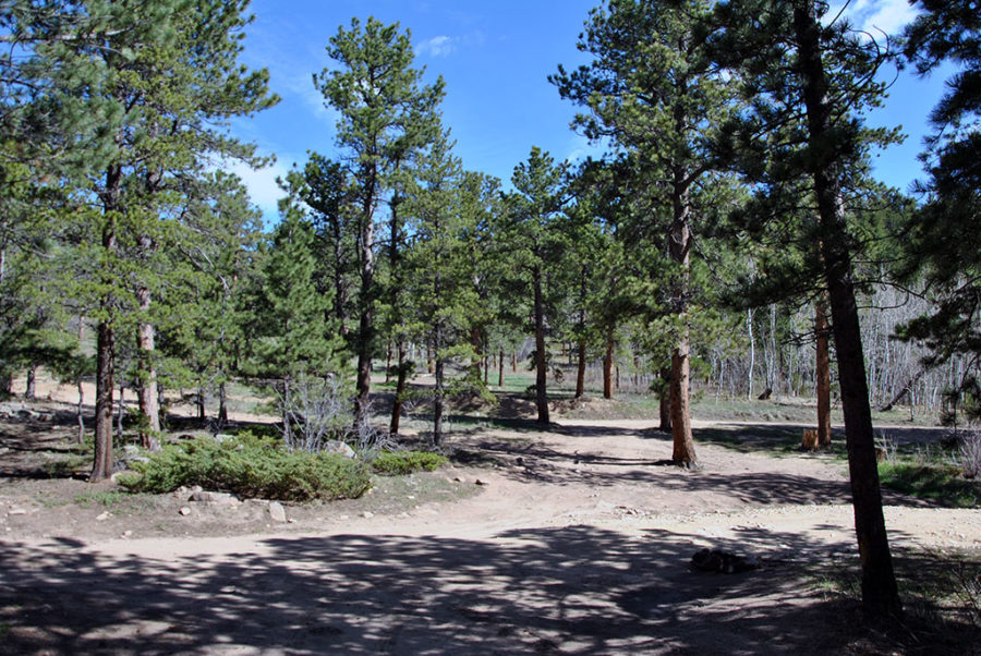 Generic-Van-Life-Camping-Spot-Johnny-Park-Road-Colorado-Trees
