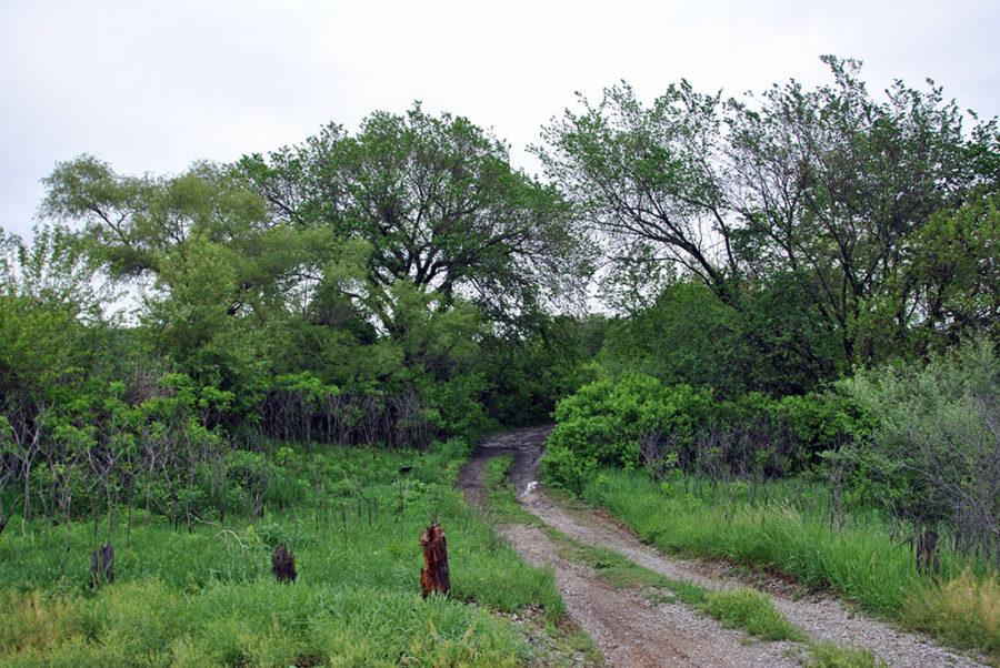 Generic-Van-Life-Camping-Spot-Wilson-Creek-WMA-Nebraska-Trail