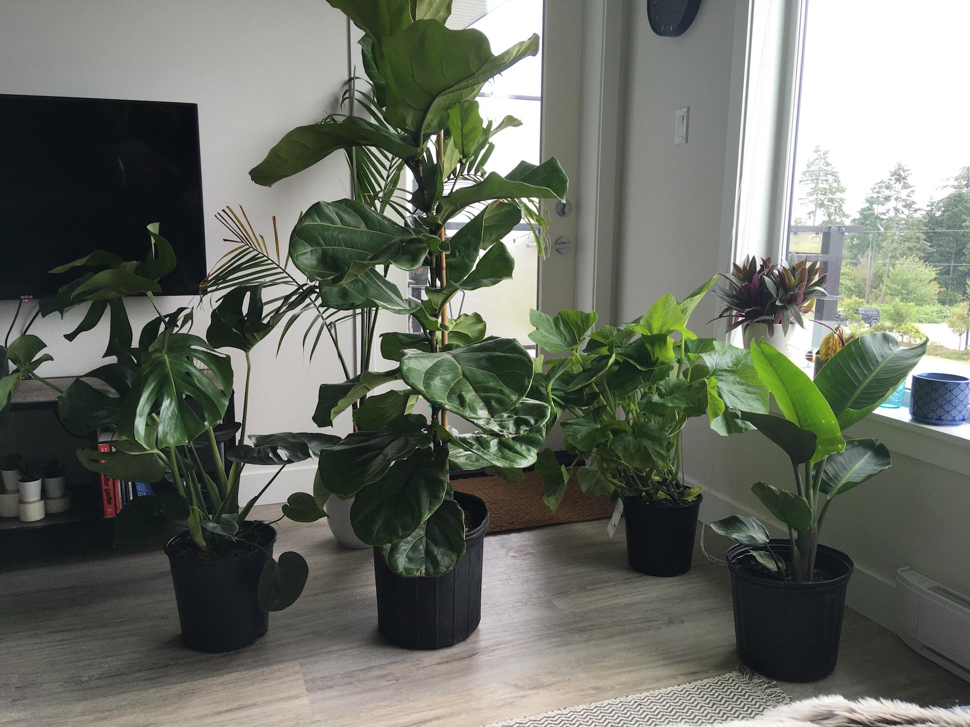 Generic Van Life - End of Van Life - Houseplants